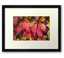 Autumn leafs Framed Print