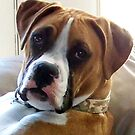 THE BOXER................. A WONDERFUL DOG by Heidi Mooney-Hill