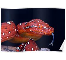 Cheeky Red baby GTP Poster