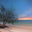 The Seaside Tree - Amity Pt  North Stradbroke Island Qld Australia by Beth  Wode