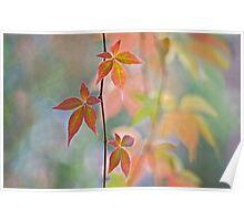 Autumnal kaleidoscope Poster