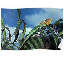 Common Green Forest Lizard (Calotes calotes), Sri Lanka Poster
