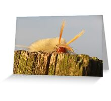 fuzzy caterpillar on fence post Greeting Card