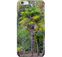 Family of Palm Trees iPhone Case/Skin