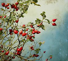 rosehips by Iris Lehnhardt