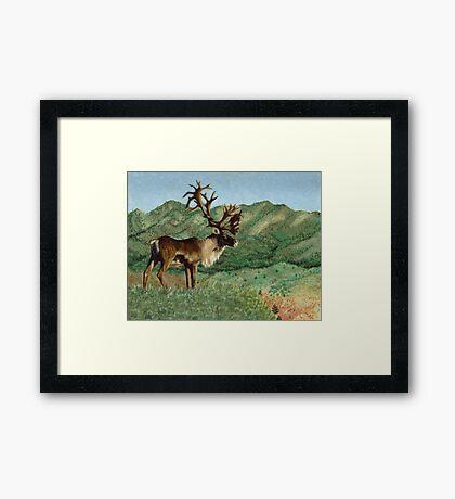 Caribou Framed Print
