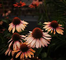 Echinacea Flowers - High Line Park - New York City by Vivienne Gucwa