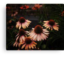 Echinacea Flowers - High Line Park - New York City Canvas Print