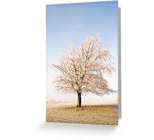 Iced Tree Greeting Card