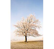 Iced Tree Photographic Print