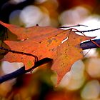 Autumn Leaf by anchorsofhope