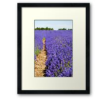 Lavender's Blue Framed Print