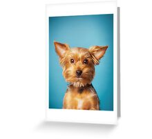 Cute Terrier on blue background Greeting Card