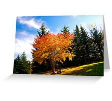 Maple tree in Fall, Alberta Canada Greeting Card
