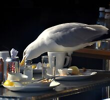Free Lunch at Padstow Cornwall UK by lynn carter