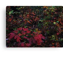 October Rain Canvas Print