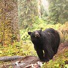 Curious Black Bear by Gina Ruttle  (Whalegeek)