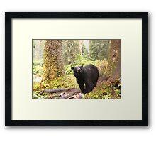Curious Black Bear Framed Print