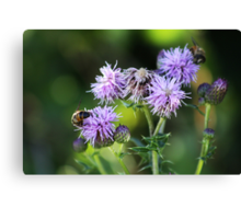 Thistles and Bees Canvas Print