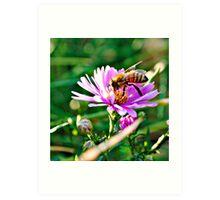 Honey Bee. Art Print