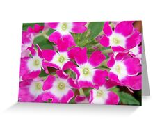 Pink flower with White center Greeting Card