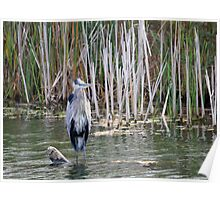 Shabby Chic! Great Blue Heron Poster