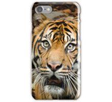 Tiger Tiger iPhone Case iPhone Case/Skin