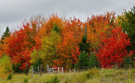 Nova Scotia Fall by David Davies