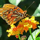 Monarch Butterfly by Cynthia48