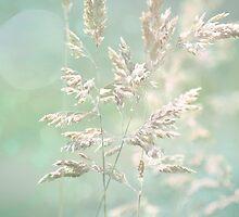 Shimmer by Linda Lees