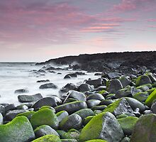 Greens  by Patrick Reid