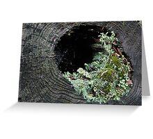 Mosses and lichens in a dead tree - Ontario, Canada Greeting Card