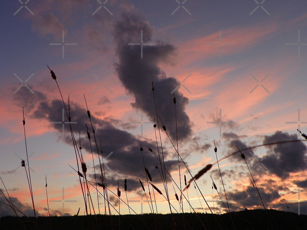 Grains of a Sunset by Betty  Town Duncan