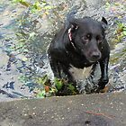 Nellie Enjoyed A Dip In The Lake by Cynthia48