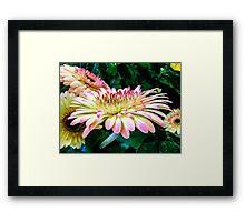 Breast Cancer Awareness Gerber Daisy Framed Print