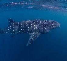 Giant from the Deep, Ningaloo, Western Australia by Erik Schlogl