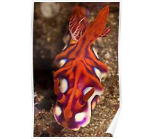 Yellow Edged Ceratosoma Poster
