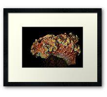 Girdled Chromodoris Framed Print