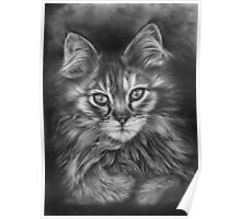 The Calico Kitten Poster