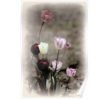 Mixed Tulips-8039-Yabba Poster