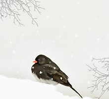 A SPARROW IN WINTER by TOM YORK