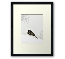 A SPARROW IN WINTER Framed Print