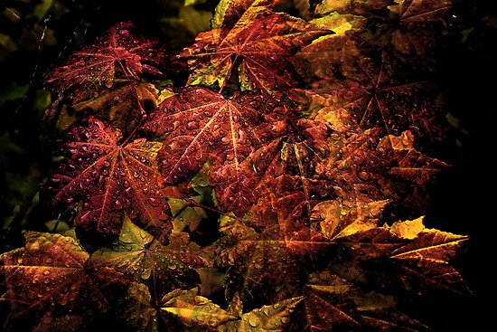 Leaf Fun by Charles & Patricia   Harkins ~ Picture Oregon