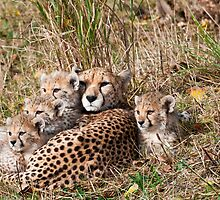 Cheetah Familiy  by WhartonWizard