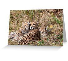 Cheetah Familiy  Greeting Card