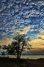 Popcorn Clouds and A Tree by Carolyn  Fletcher