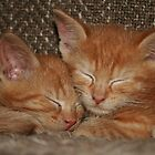 Sweet Kitten Dreams by Jo Nijenhuis