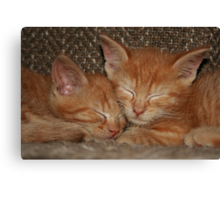 Sweet Kitten Dreams Canvas Print