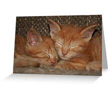 Sweet Kitten Dreams Greeting Card