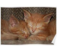 Sweet Kitten Dreams Poster